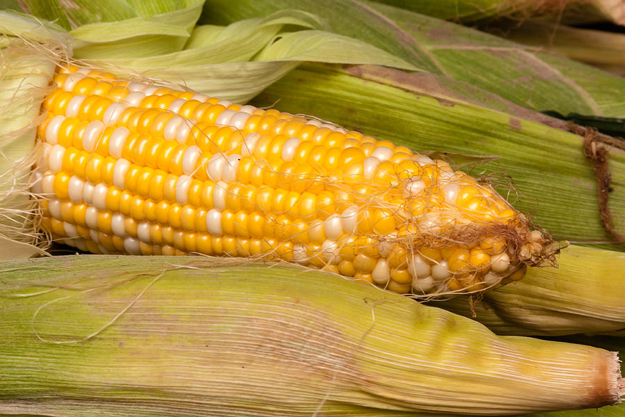 Agriculture Photograph - Fresh Corn At Farmers Market by Teri Virbickis