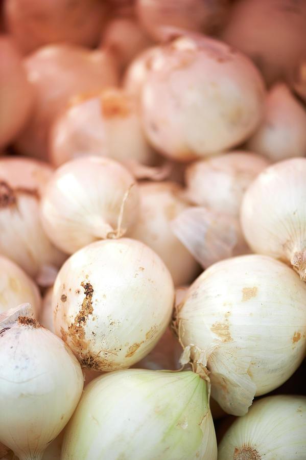 Fresh Farmers Onions Photograph by Cameron Davidson
