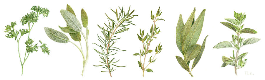 Fresh Herbs Drawing