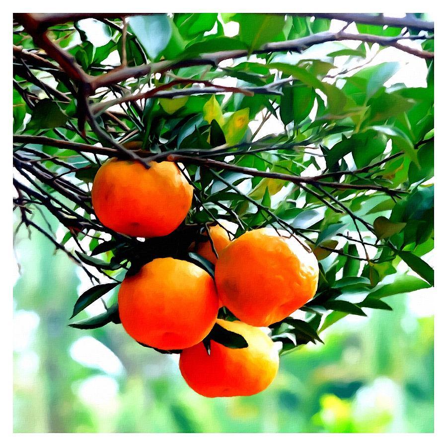 Fresh Orange On Plant Painting - Fresh Orange On Plant by Lanjee Chee