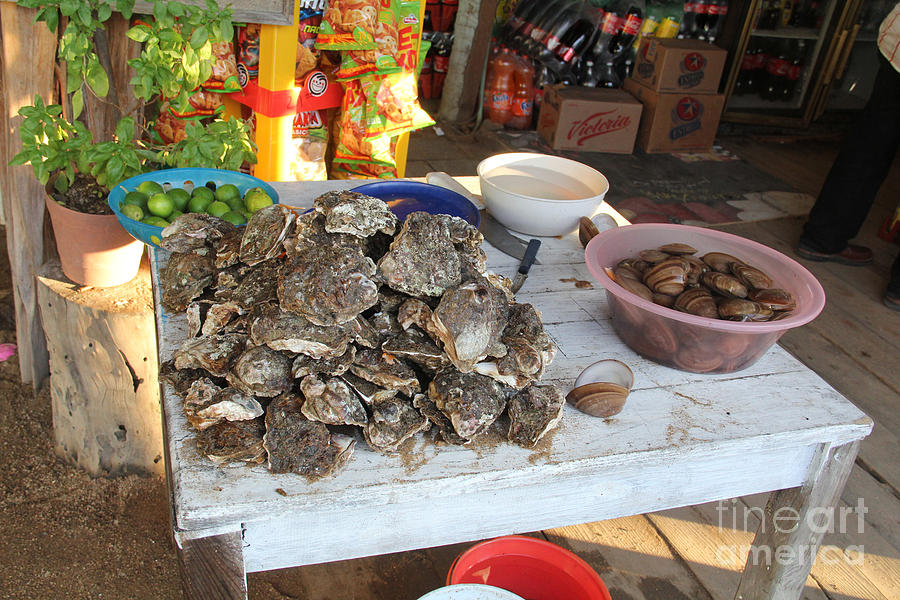 Oysters Photograph - Fresh Oysters Barre De Navidad by Linda Queally
