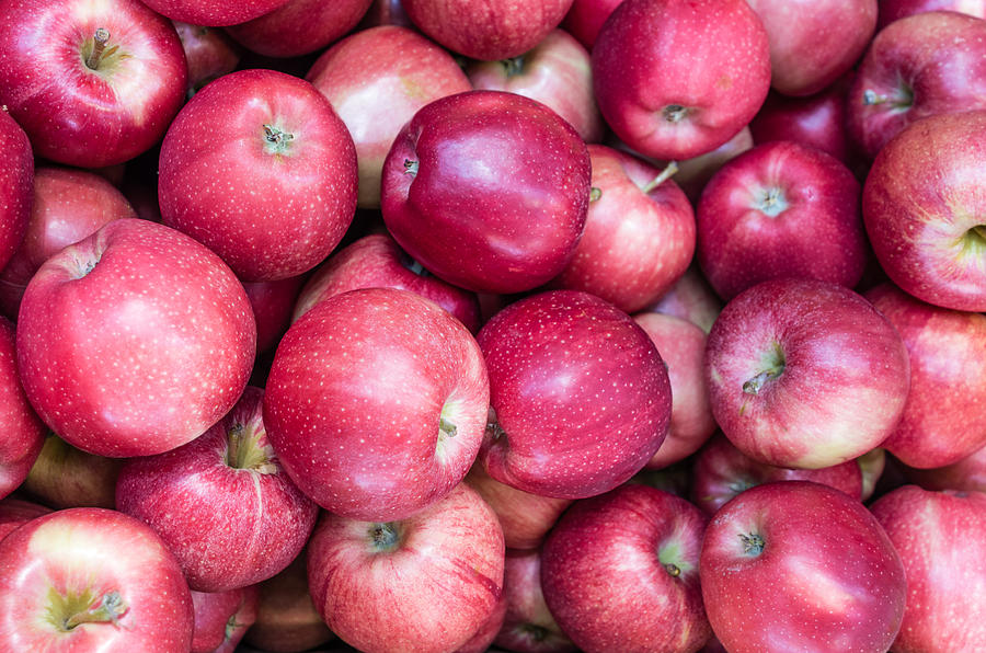 Agriculture Photograph - Fresh Red Apples by John Trax