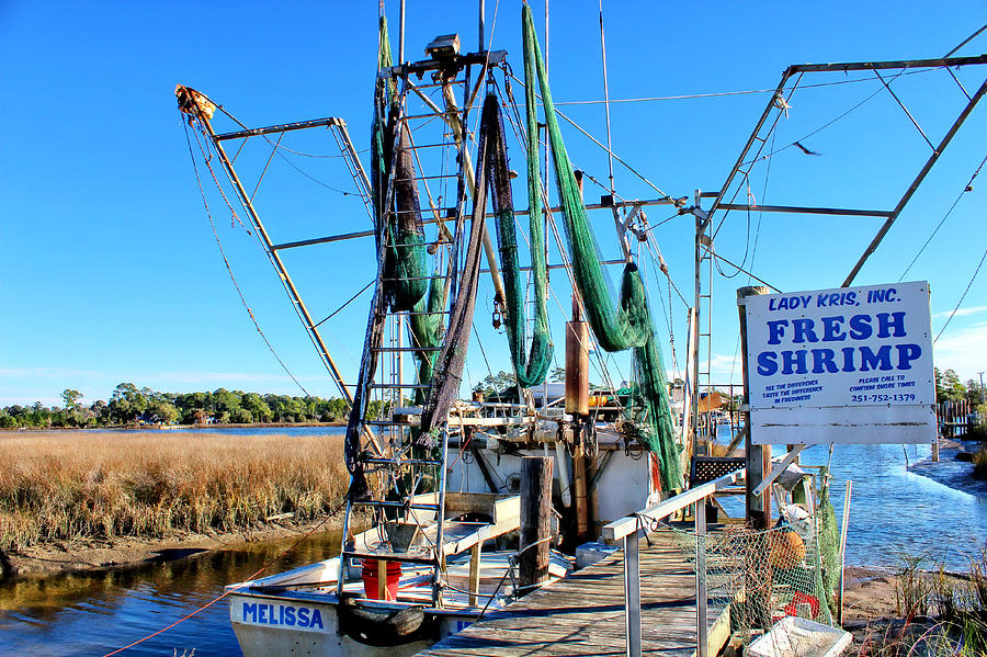 Shrimp Boat Photo Photograph - Fresh Shrimp by Lynn Jordan