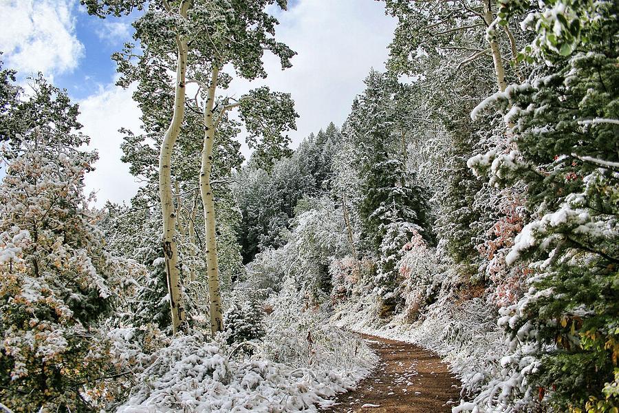 Fresh Snow by Gene Praag