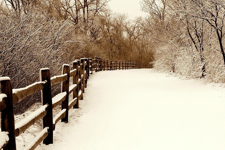 Winter Photograph - Fresh Snow by Rosanne Jordan