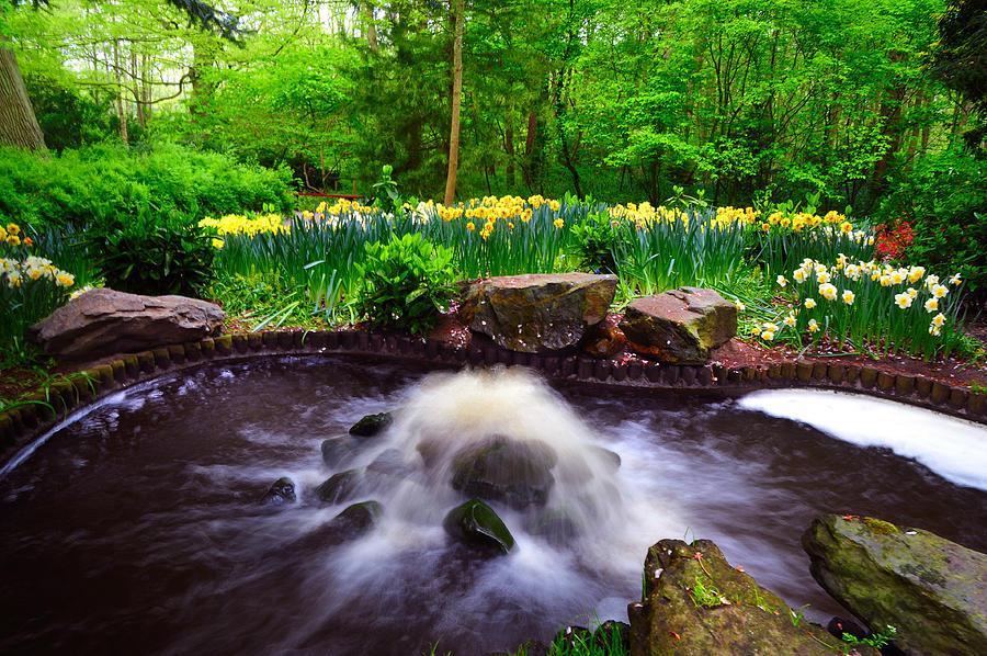 Fresh Stream. Keukenhof Botanical Garden. Netherlands Photograph