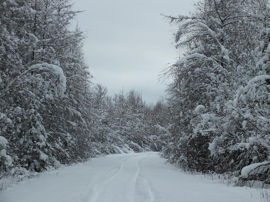 Heavy Snow Photograph - Fresh Trail by Gene Cyr