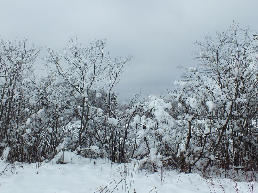 Heavy Snow Photograph - Freshly Fallen by Gene Cyr