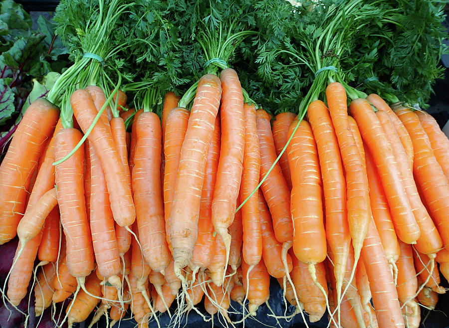 Freshly Grown Carrots In A Country Photograph by Virginia Star