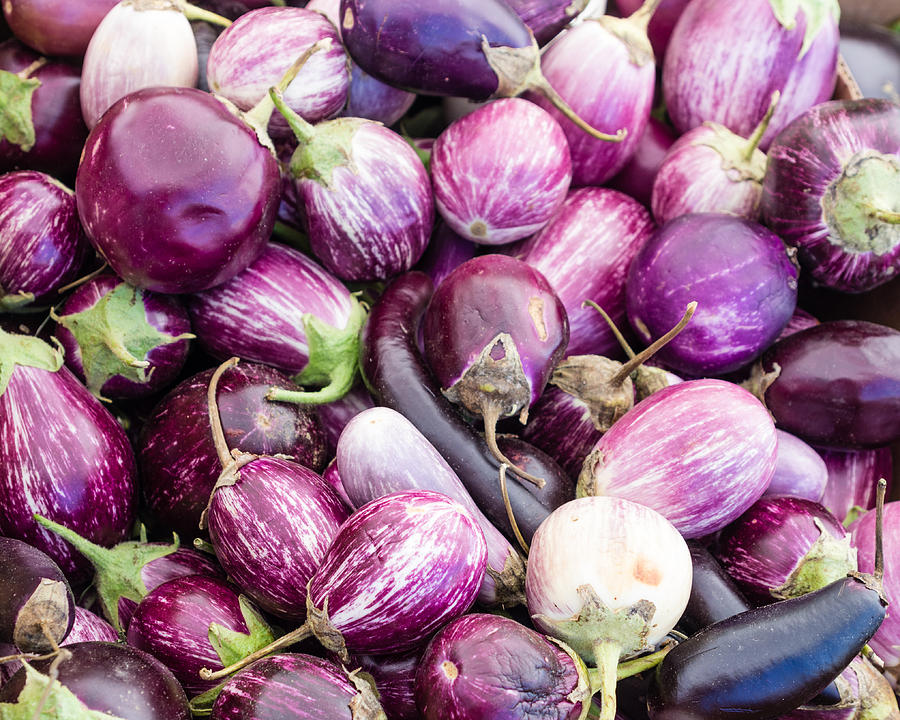 Agriculture Photograph - Freshly Harvested Purple Eggplants by John Trax