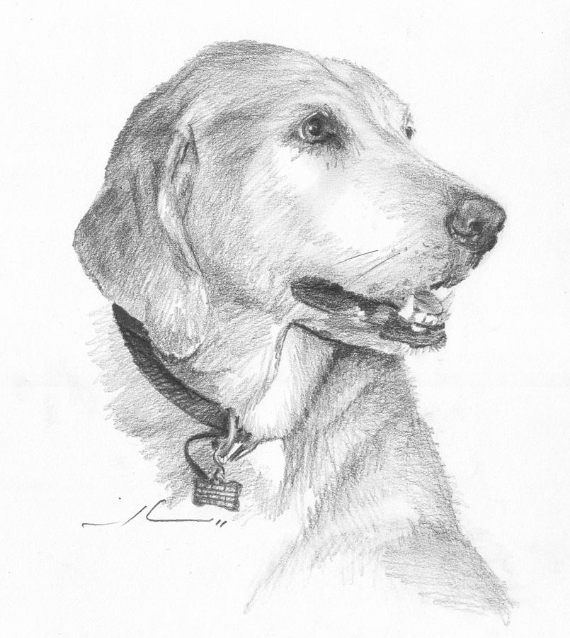 Friendly Dog Pencil Portrait  Drawing by Mike Theuer