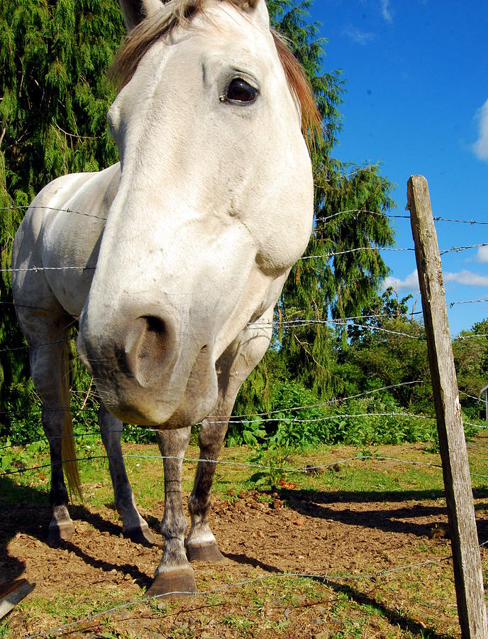 Country Photograph - Friendly Horsey by Mamie Gunning