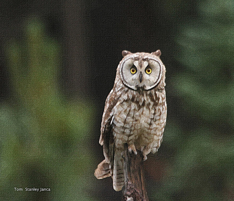 Friendly Owl In The Forest Photograph by Tom Janca