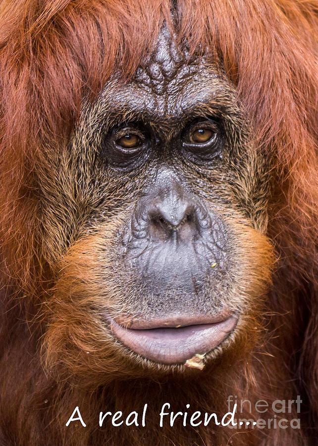 Monkey Photograph - Friendship Card by Edward Fielding