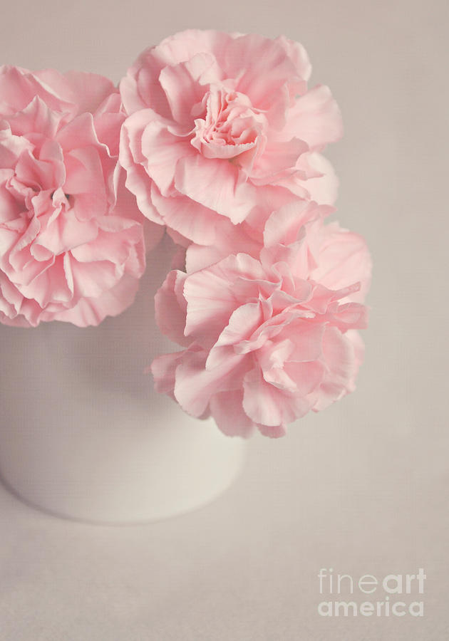 Flowers Photograph - Frilly Pink Carnations by Lyn Randle