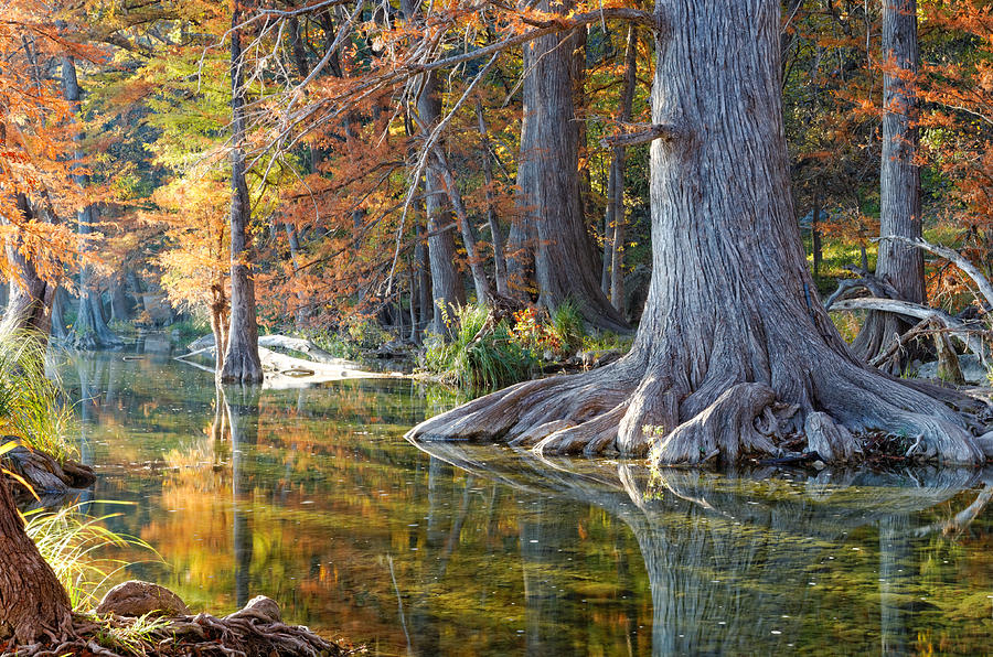 Bald Cypresses Photograph - Frio River Morning by Silvio Ligutti