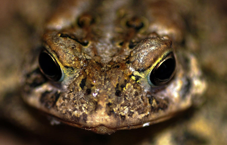 Green Algae Photograph - Frog 2 by Optical Playground By MP Ray