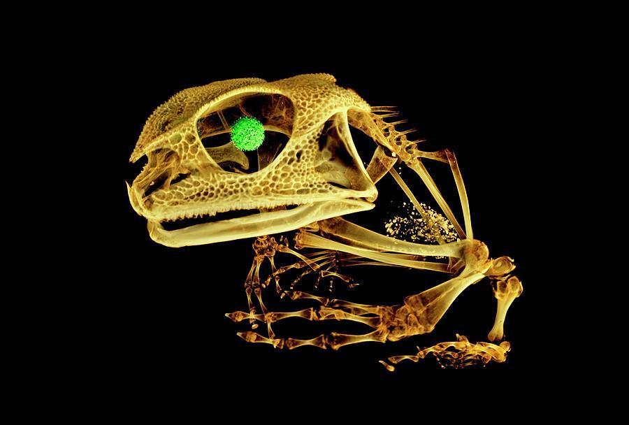 Animal Photograph - Frog by Dan Sykes/natural History Museum, London