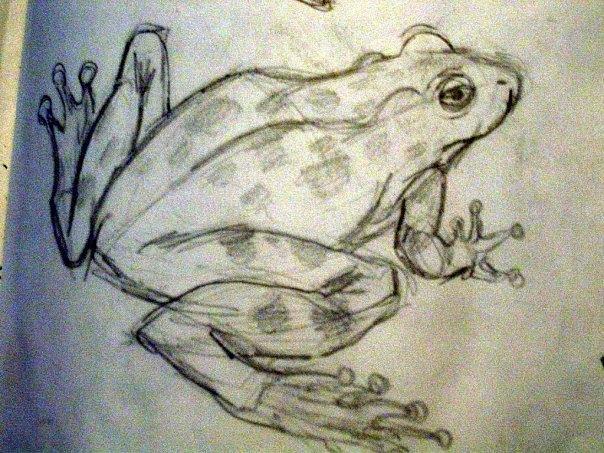 Frog Drawing by Lauren  Pecor