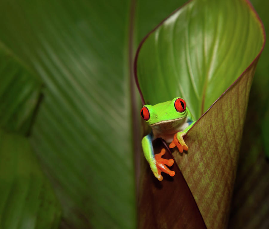Frog On A Plant In Its Natural Photograph by Kerkla