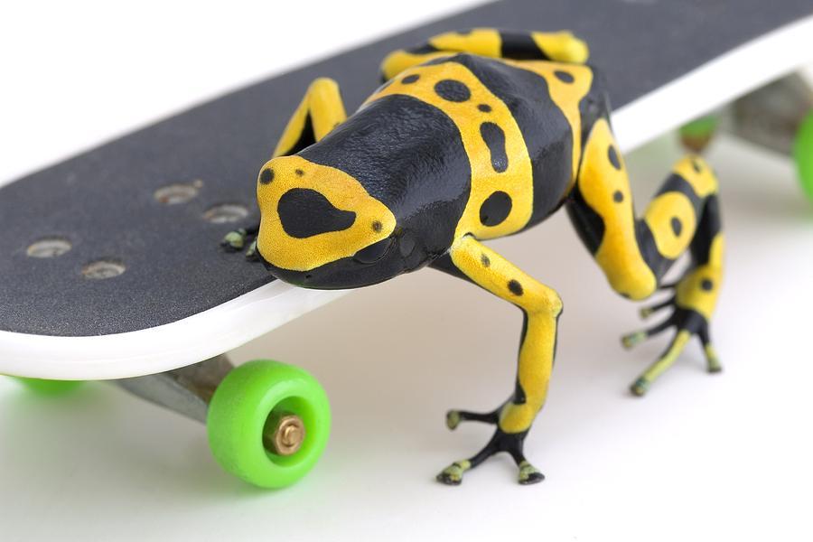 Frog On A Skateboard Photograph