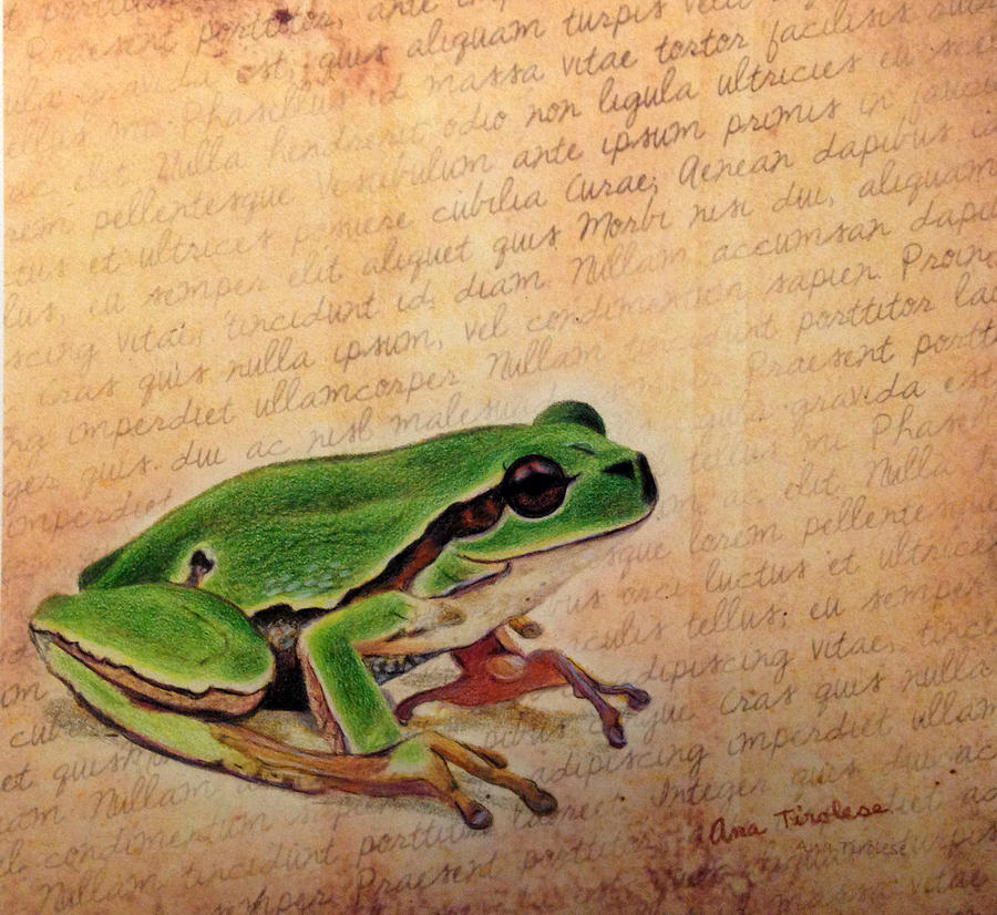Frog on Paper by Ana Tirolese