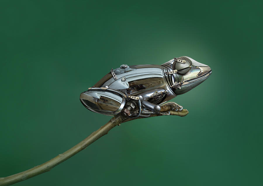Metal Photograph - Frog by Sulaiman Almawash