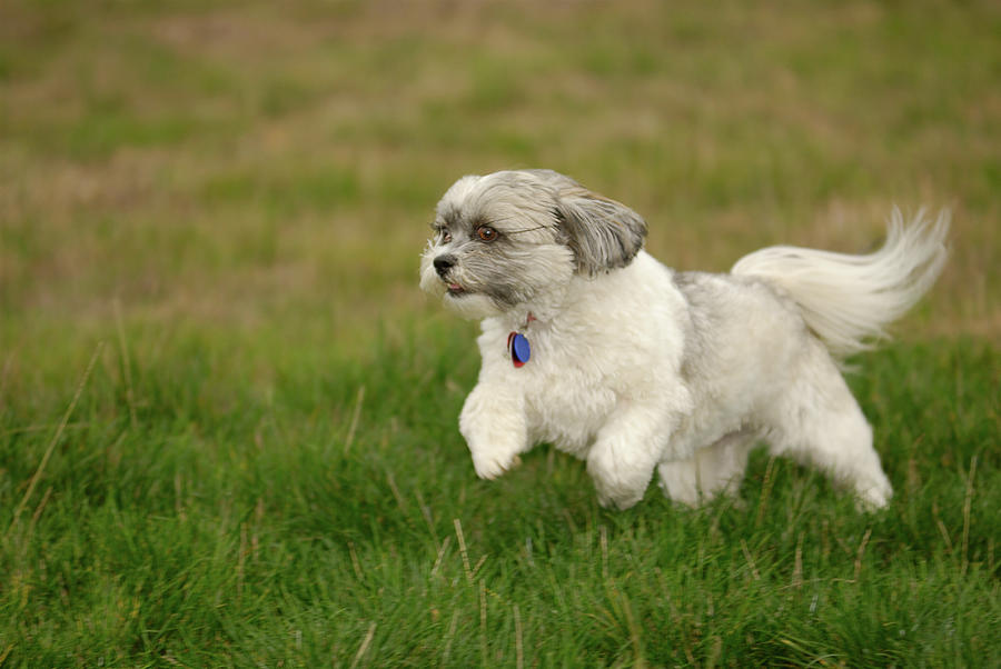 Dog Photograph - Frollic by Arthur Fix