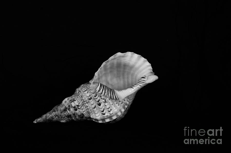 Sea Shell Photograph - From Another Place by Randi Grace Nilsberg