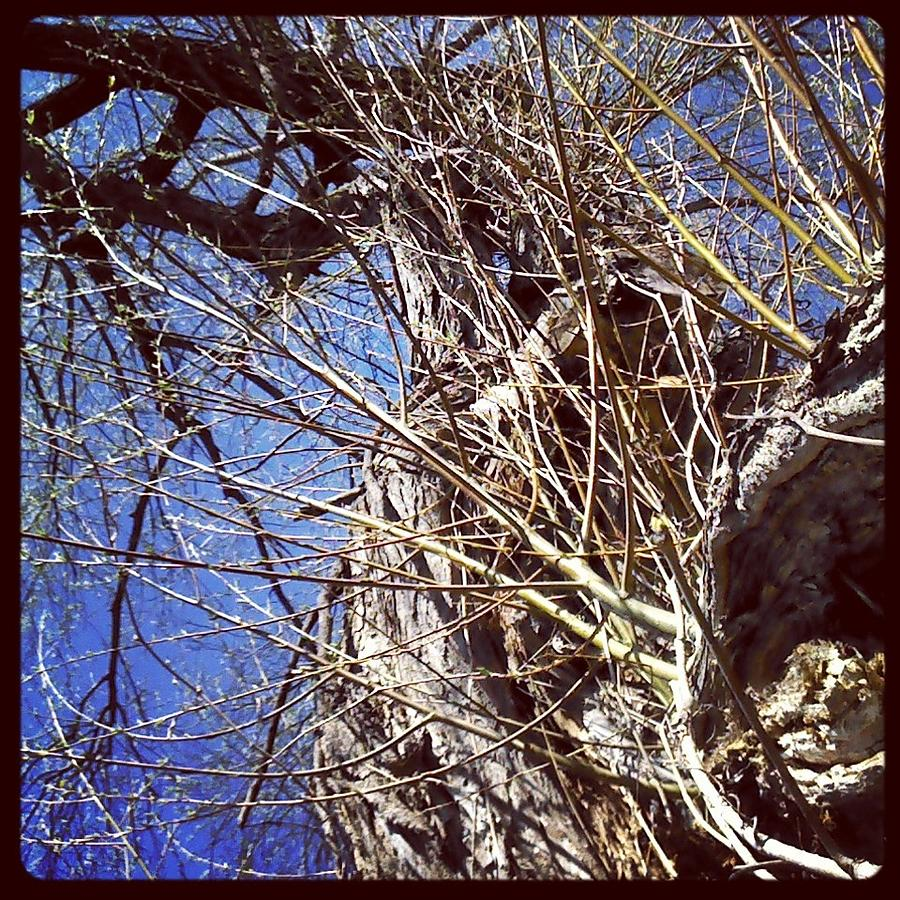 Tree Photograph - From Beneath by Beth Burns