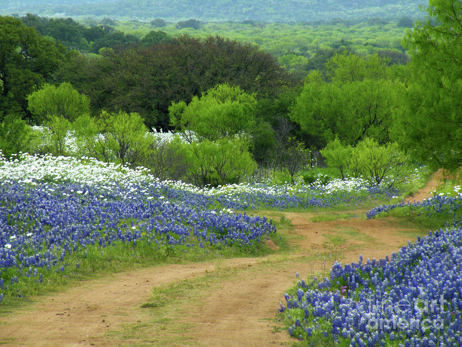 Bluebonnets Photograph - From Here To There by Joe Jake Pratt
