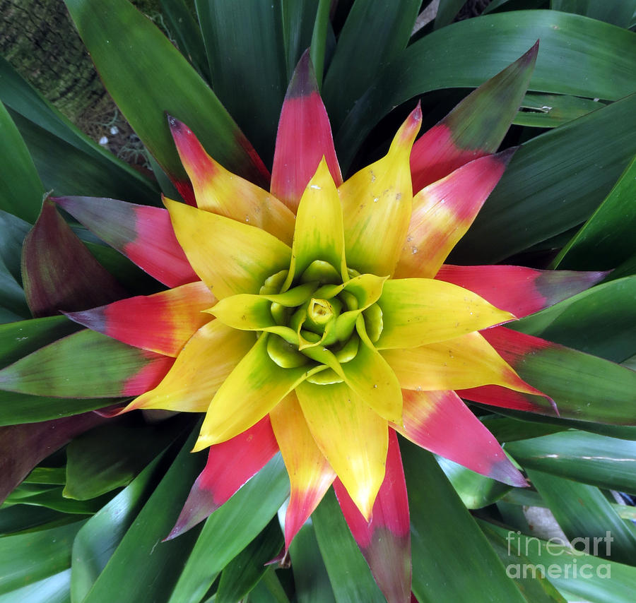 Flower Photograph - From The Top Down by Darleen Stry