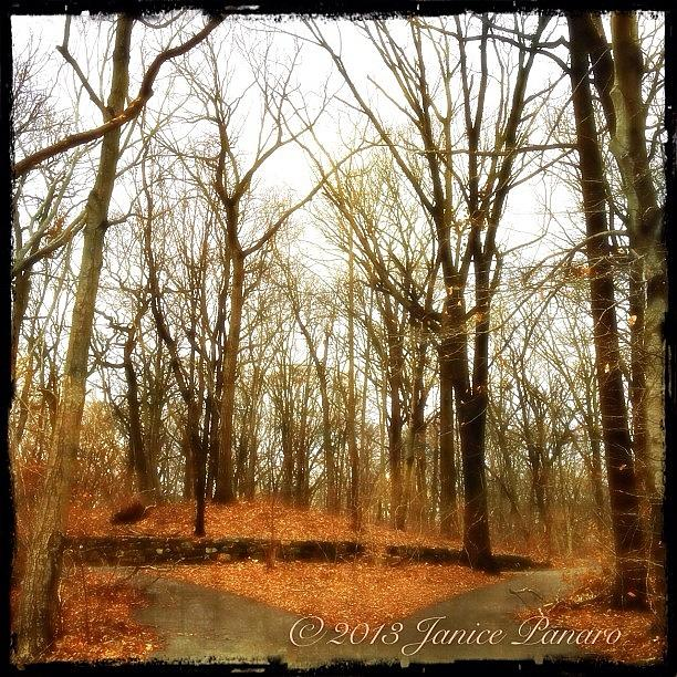 Autumn Photograph - From Todays Walk In The Park #trees by Jan Pan