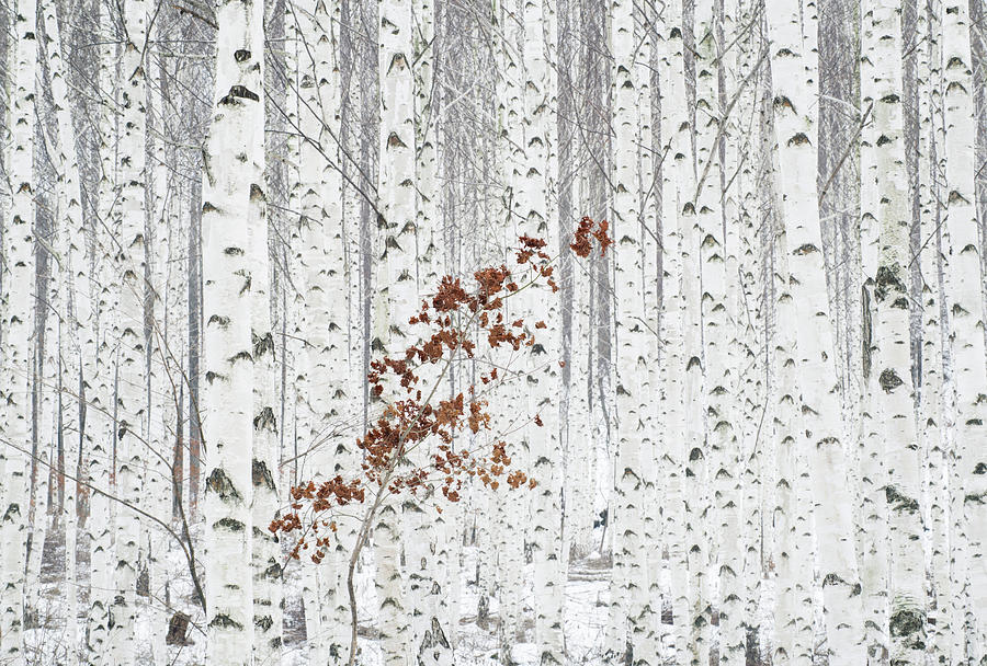 Landscape Photograph - From White by Donghee, Han