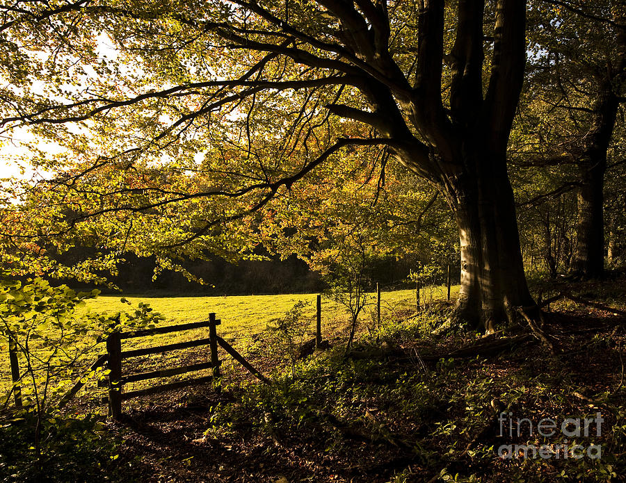 Autumn Photograph - From Woods To Fields by Anne Gilbert