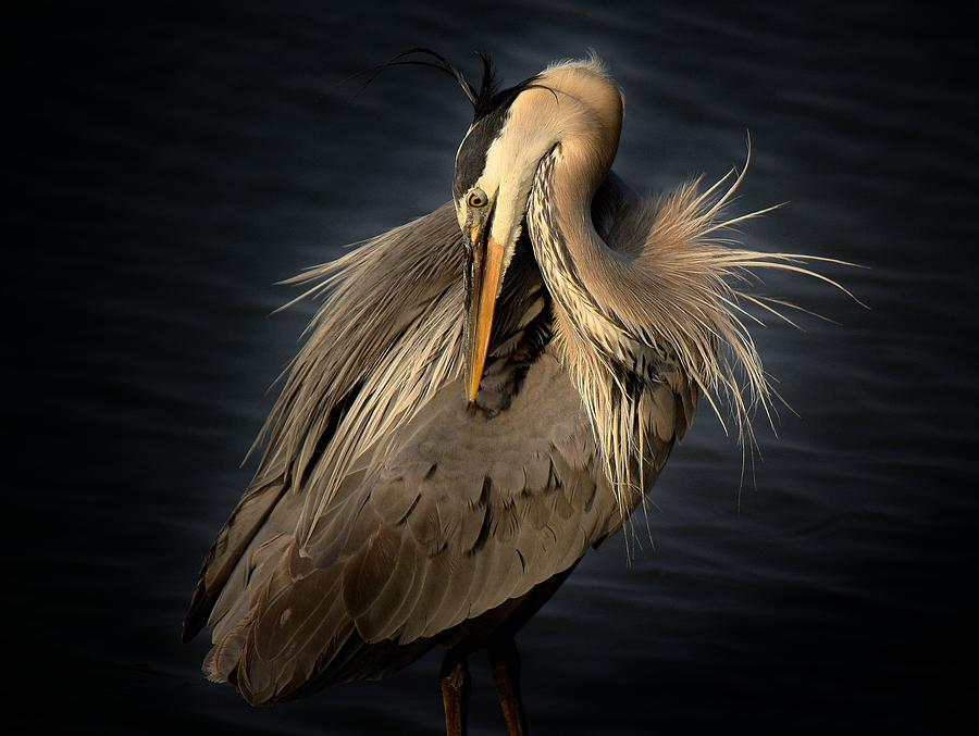 Bird Photograph - Front Cover Of The Grand Strand Magazine by Paulette Thomas