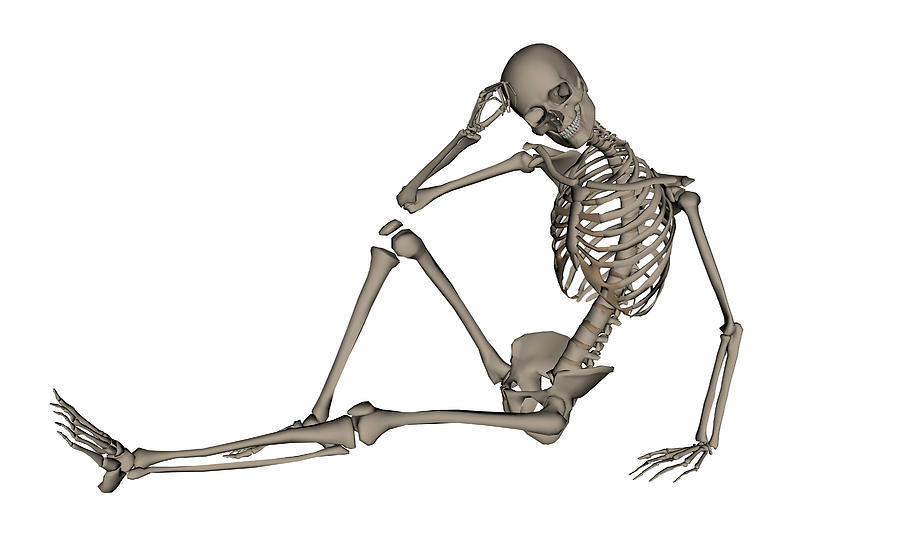 Front View Of A Human Skeleton Posing