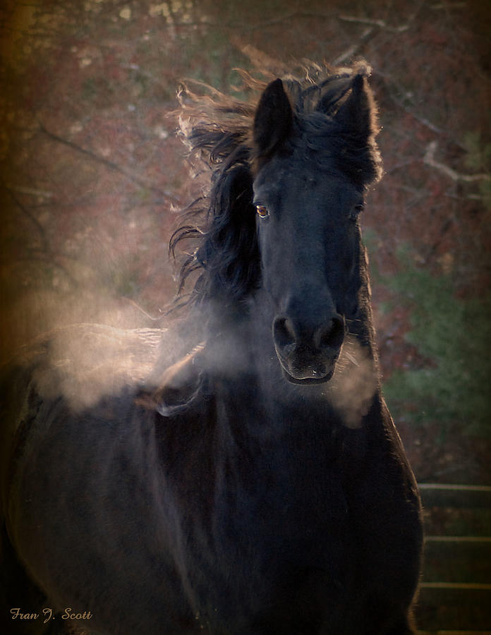 Horses Photograph - Frost by Fran J Scott