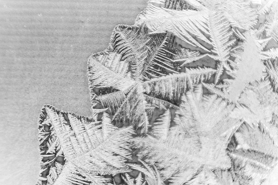 Frost Photograph - Frost In Black And White by Dana Moyer