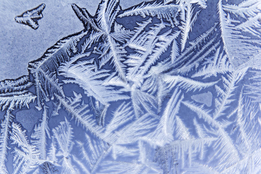 Frost Photograph - Frost In Blue by Dana Moyer