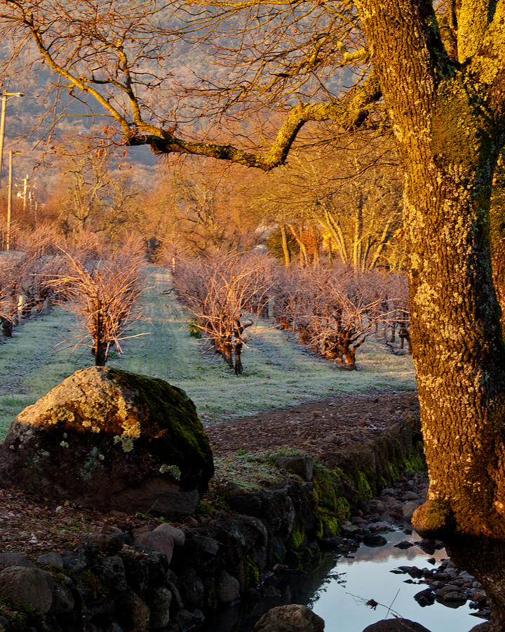 Oak Photograph - Frost In The Valley Of The Moon by Bill Gallagher