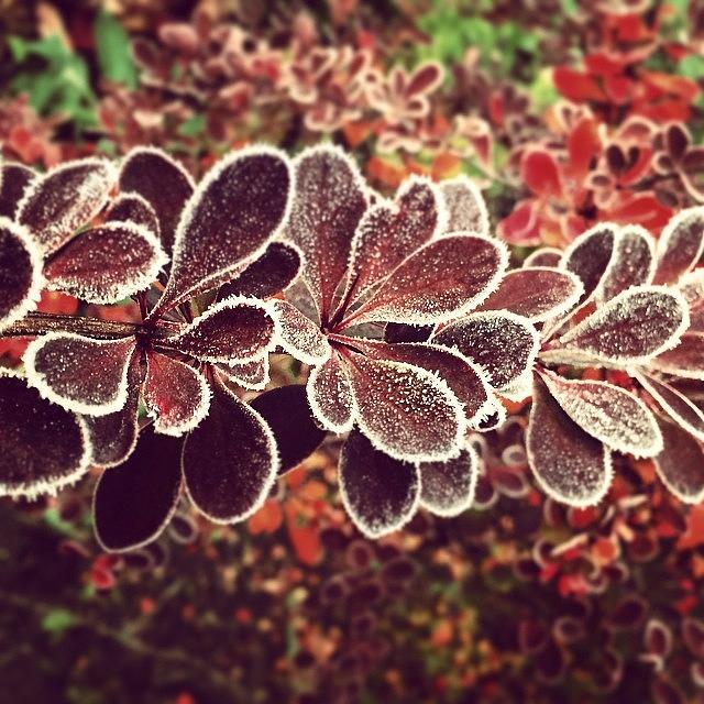Frost Photograph - Frost by Illusorium Illustration
