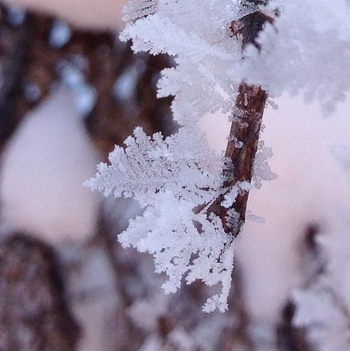 Frost Photograph - Frost Leaves by Gaby Tench