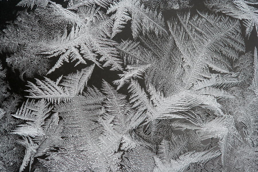 Frost Photograph - Frost Patterns by Carolyn Reinhart
