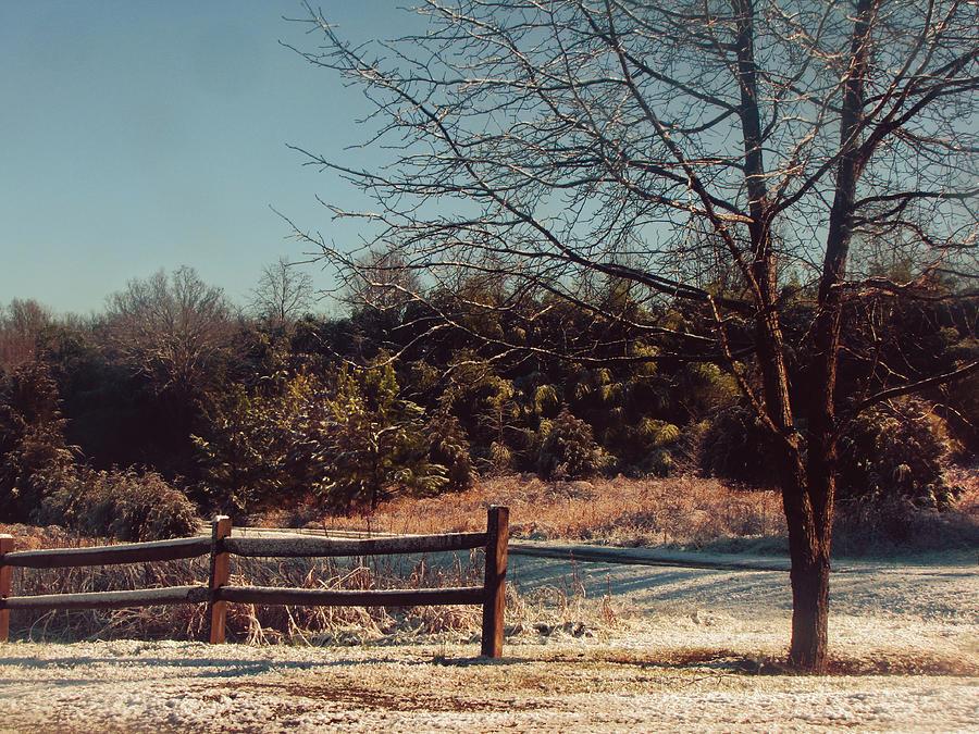 Frostbitten Fences Photograph