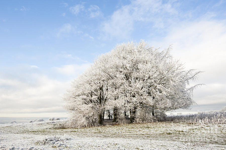 Blue Photograph - Frosted Copse by Anne Gilbert