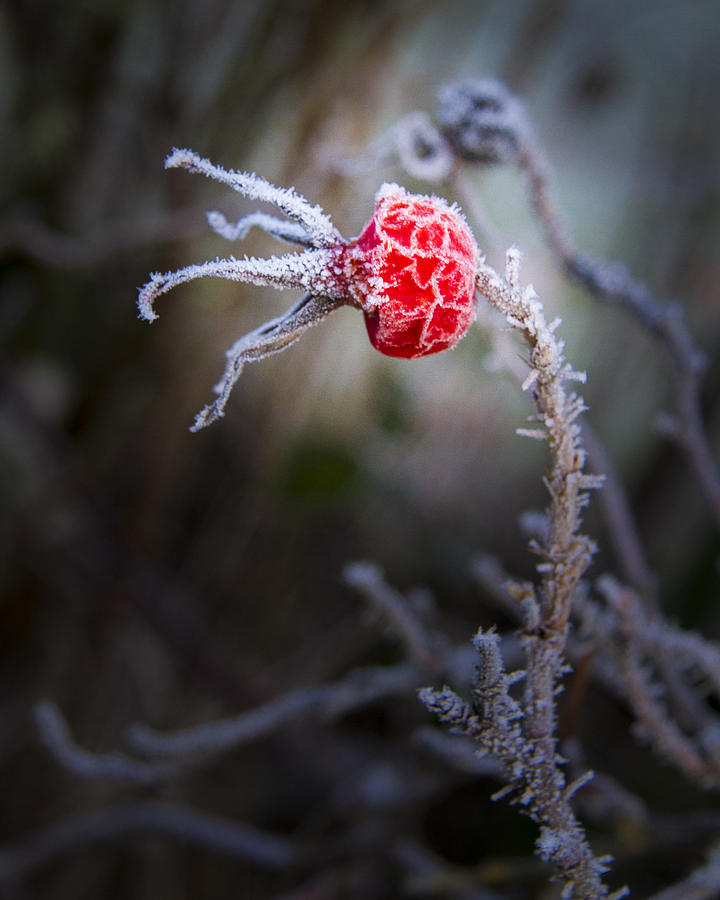 Weather Photograph - Frosted by Jean Noren