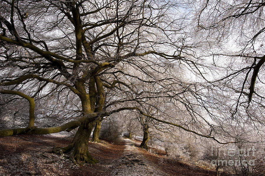 Bare Photograph - Frosted Path by Anne Gilbert