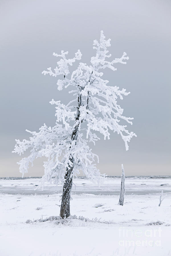 Tree Photograph - Frosted Tree by Tim Grams