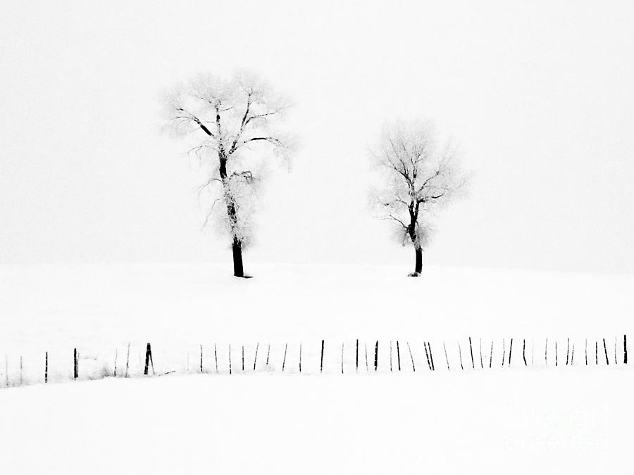Frosted Trees by Karla Weber